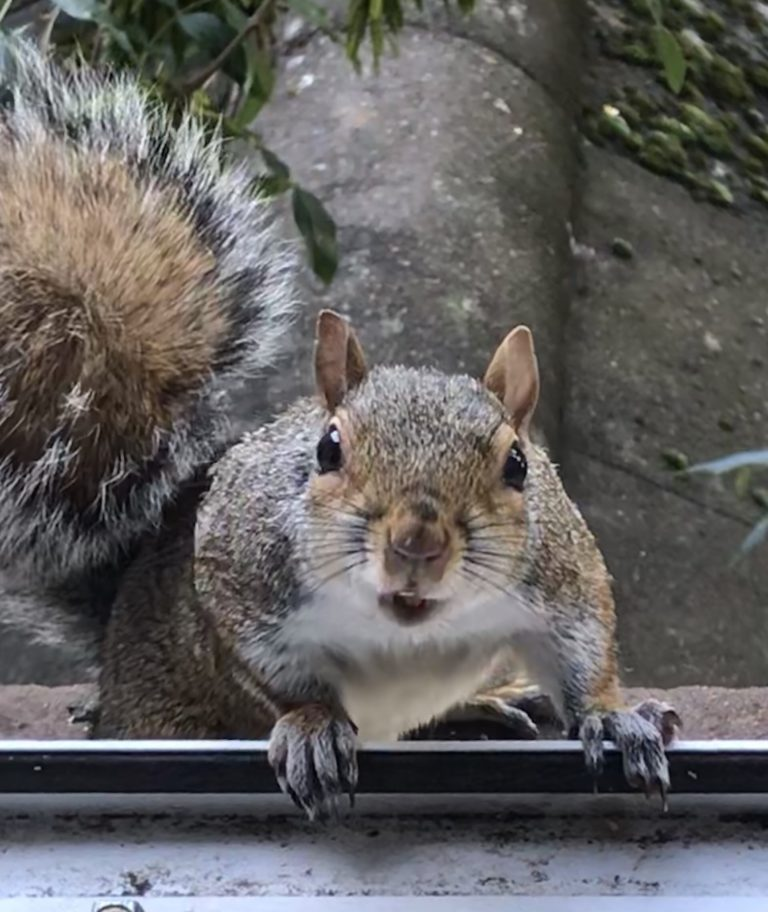 In London, it's either grey squirrels, or no squirrels at all