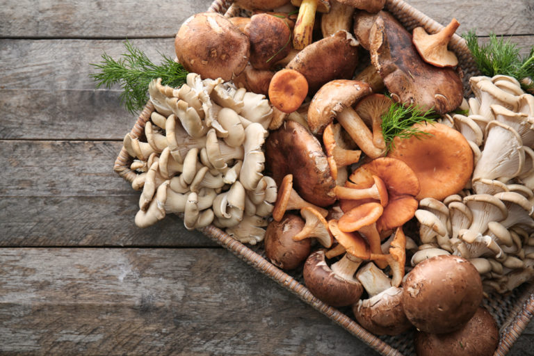 Why mushrooms are the answer to all our problems
